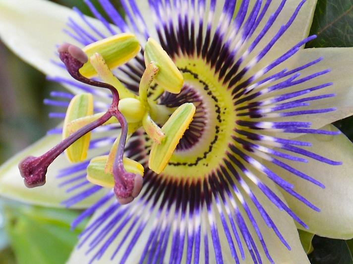 自然のデザインはすごいなあ。かなり変わった姿をした植物達。