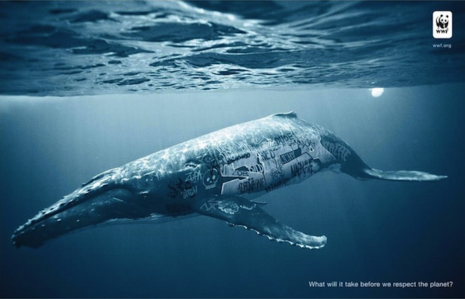 biodiversity-and-biosafety-awareness-whale1